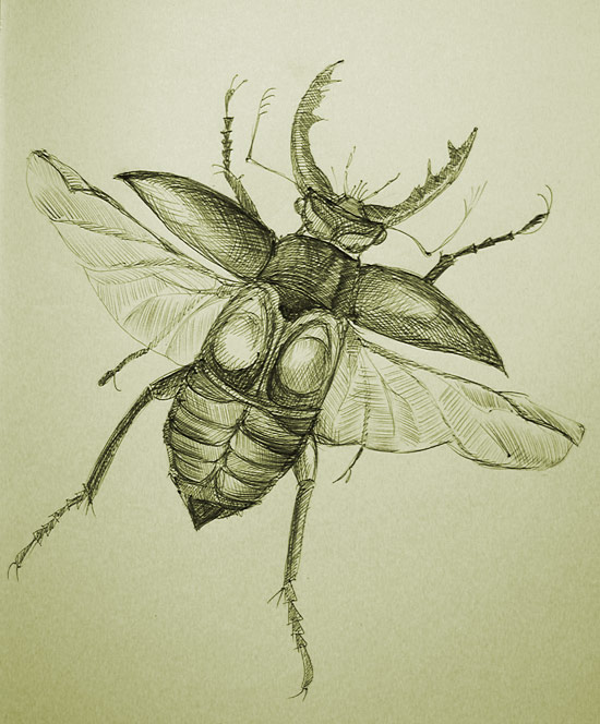 APPLE INSECTS OF CONNECTICUT Station Bulletin #71 (1912) illustrated 44-pages